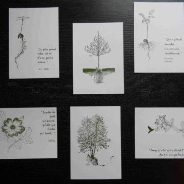 Planter un arbre en offrant une carte!