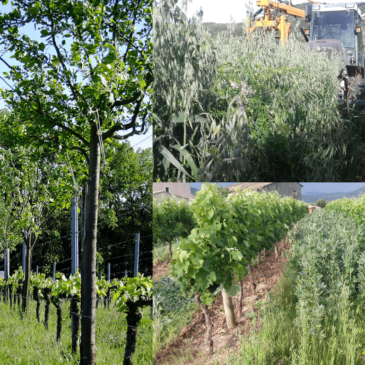 Formation Viticulture sur les Couverts Végétaux et l'Agroforesterie avec Konrad Schreiber et Alain Canet – les 8 et 9 juillet