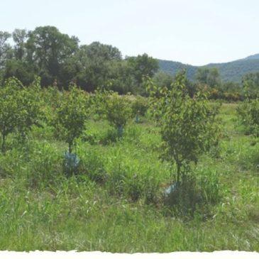 SAVE THE DATE : Deux journées de rencontre sur ferme  agroforestières en Ardèche !