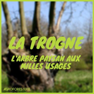 La Trogne, l'arbre paysan aux mille usages – par Dominique Mansion